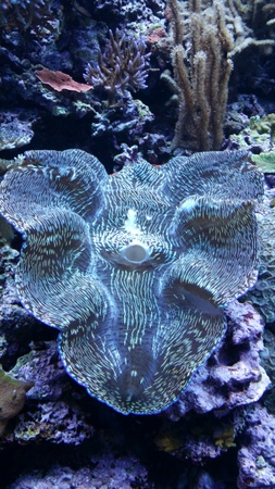 Pretty clam